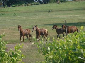 Horses at Equus Village Pedasi Panama – Best Places In The World To Retire – International Living