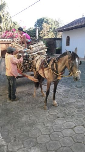 Darrell Bushnell Nica Nuggets horse and cart Granada – Best Places In The World To Retire – International Living