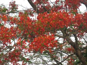 Malinche bright orange tree Nicaragua – Best Places In The World To Retire – International Living