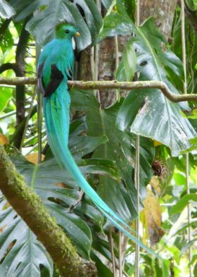 Quetzal bird Cerro Punta Panama bird watching – Best Places In The World To Retire – International Living