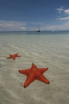 Sea_stars_at_Bocas_del_Toro,_Panama – Best Places In The World To Retire – International Living