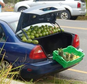 Avacados & fruit for sale from back of a car, Boquete, Panama – Best Places In The World To Retire – International Living