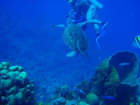 Scuba diving at Belize coral reef – Best Places In The World To Retire – International Living