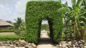 Belize vine covered walkway in garden – Best Places In The World To Retire – International Living