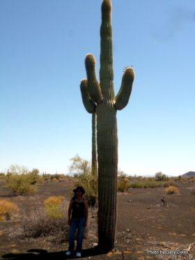 Giant Cactus in El Pinacate Reserve – Best Places In The World To Retire – International Living