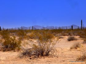 Desert scene in El Pinacate Reserve – Best Places In The World To Retire – International Living