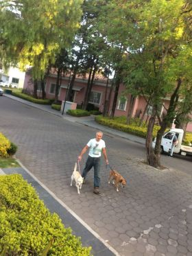 Chuck Bolotin walking dogs near MM Hotel, Puebla, Mexico – Best Places In The World To Retire – International Living