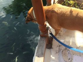 Dog looks at fish in a tank at aquaculture restaurant in Veracruz, Mexico – Best Places In The World To Retire – International Living