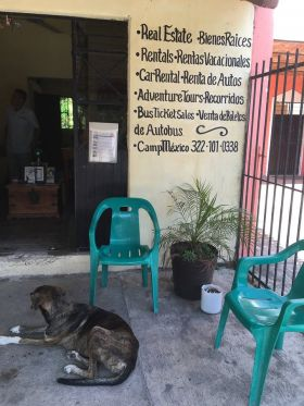 Dog in front of Galvan Real Estate, Lo de Marcos, Mexico – Best Places In The World To Retire – International Living