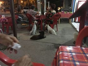 Dogs waiting for food outside restaurant in Lo de Marcos, Nayarit – Best Places In The World To Retire – International Living