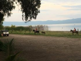 Horses by the lake in Ajijic – Best Places In The World To Retire – International Living