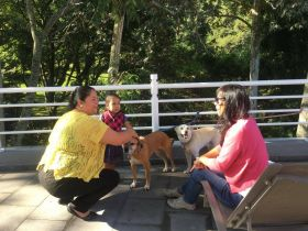 Dogs on the patio of hotel in Cordoba, Mexico, with Jet Metier – Best Places In The World To Retire – International Living