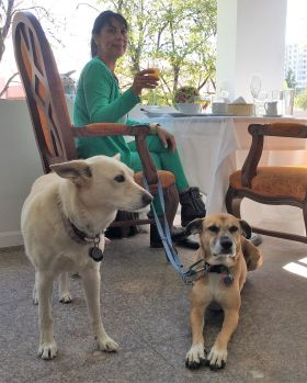 Jet Metier with two dogs at a restaurant in Puebla – Best Places In The World To Retire – International Living