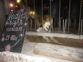 Lady's Night Tulum with Dog – Best Places In The World To Retire – International Living