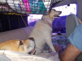 Our two dogs in Mexico in the big white van