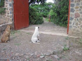 Dogs looking into a yard in Jocotepec – Best Places In The World To Retire – International Living