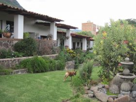 Dogs running at a house garden in Jocotepec – Best Places In The World To Retire – International Living