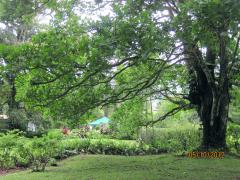 Back yard in El Valle de Anton, Panama – Best Places In The World To Retire – International Living