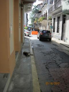 Dog in the street in Casco Viejo, Panama – Best Places In The World To Retire – International Living