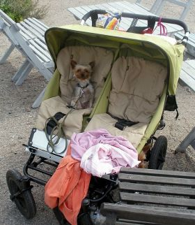 dog in carriage – Best Places In The World To Retire – International Living