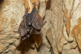 Bats seen  while spelunking, Bocas del Toro, Panama – Best Places In The World To Retire – International Living