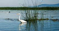 Bird on Lake Chapala, Mexico – Best Places In The World To Retire – International Living