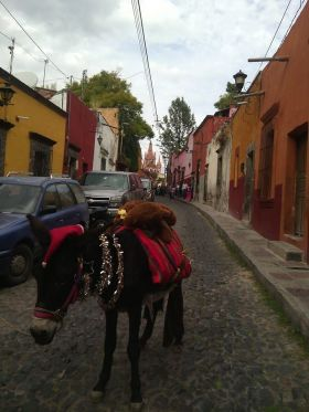 Burro on a street in San Miguel de Allende, Mexico – Best Places In The World To Retire – International Living