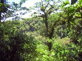 Cloud forest in Mombacho, Nicaragua – Best Places In The World To Retire – International Living