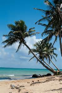 Coconut tree on the Caribean side of Nicaragua – Best Places In The World To Retire – International Living