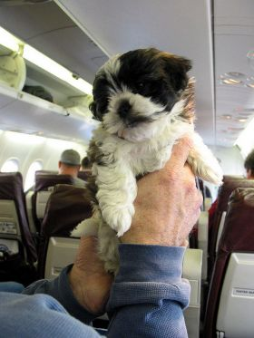 Dog in plane – Best Places In The World To Retire – International Living