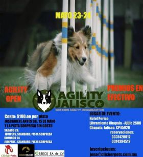 Dog agility competition held at Hotel Perico, Lake Chapala, Mexico – Best Places In The World To Retire – International Living