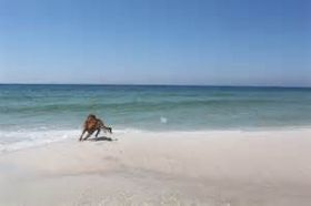 Dog at the beach – Best Places In The World To Retire – International Living