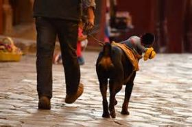 Dog with a toy cowboy on its jacket, San Miguel de Allende, Mexico – Best Places In The World To Retire – International Living