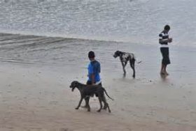 Dogs on the beach in Nicaragua – Best Places In The World To Retire – International Living