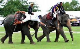 Elephant polo in Thailand – Best Places In The World To Retire – International Living