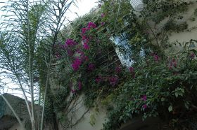 Flowers covering a window in Guadalajara, Mexico – Best Places In The World To Retire – International Living