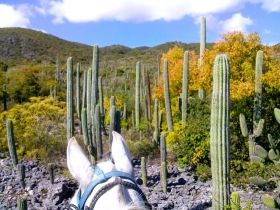 Horseback riding in the valley of Oaxaca, Mexico – Best Places In The World To Retire – International Living