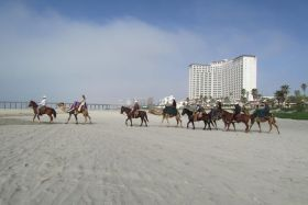 Horses and camels on the beach at Rosarita Beach, Mexico – Best Places In The World To Retire – International Living