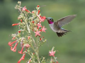 Hummingbird – Best Places In The World To Retire – International Living