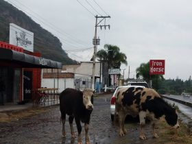 Iron Horse Bar with cows grazing, Ajijic, Mexico – Best Places In The World To Retire – International Living