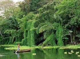 Panamanian jungle – Best Places In The World To Retire – International Living