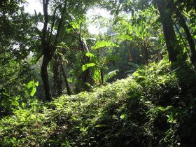 Rain forest, Panama – Best Places In The World To Retire – International Living