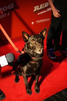 dog on red carpet – Best Places In The World To Retire – International Living