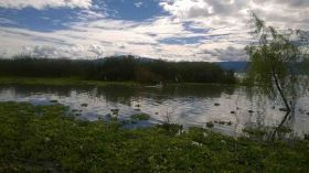 Reeds and birds on shoreline of Lake Chapala, Ajijic, Mexico – Best Places In The World To Retire – International Living