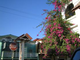 San Ignacio, Cayo  District, Belize, street, house, flowers – Best Places In The World To Retire – International Living