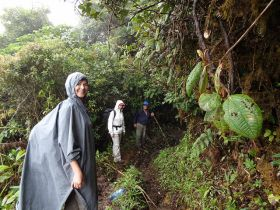 cloud forest, Boquete hikers – Best Places In The World To Retire – International Living