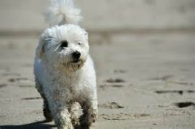 dog on beach – Best Places In The World To Retire – International Living