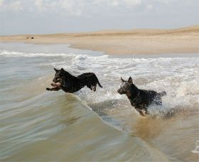 dogs on the beach – Best Places In The World To Retire – International Living