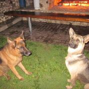 The Oldham German Shepard security force – Best Places In The World To Retire – International Living