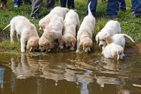 puppies drinking from pond – Best Places In The World To Retire – International Living